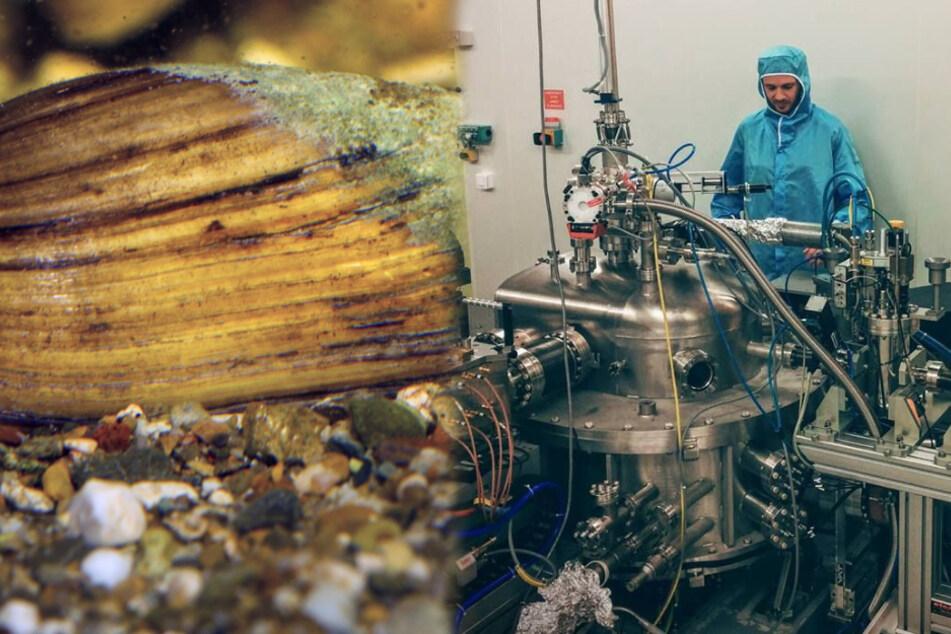 Dresdner Forscher kommen dem Perlmutt-Geheimnis auf die Spur