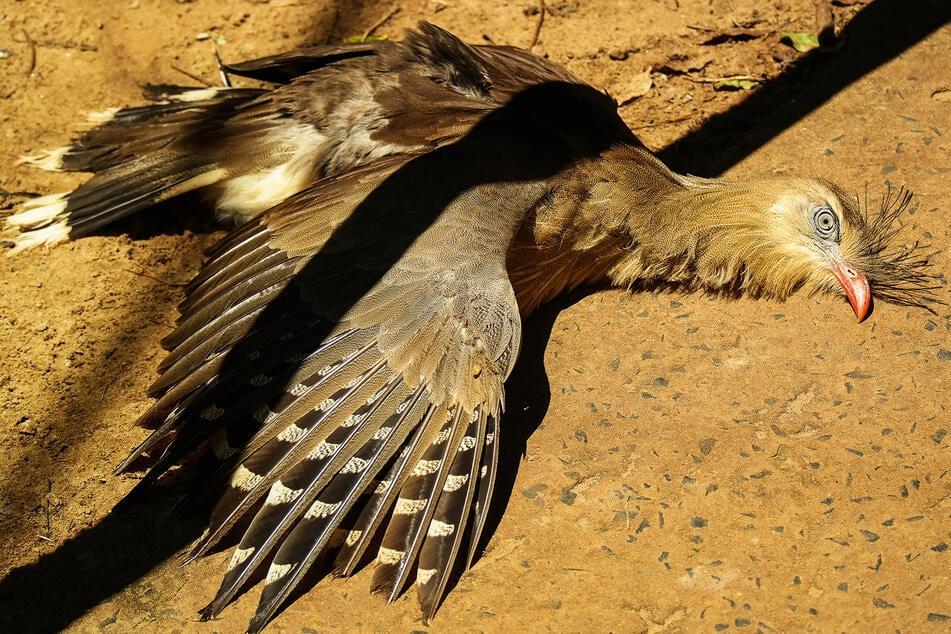Vogel liegt wie tot auf dem Boden: Was ist nur los mit ihm?