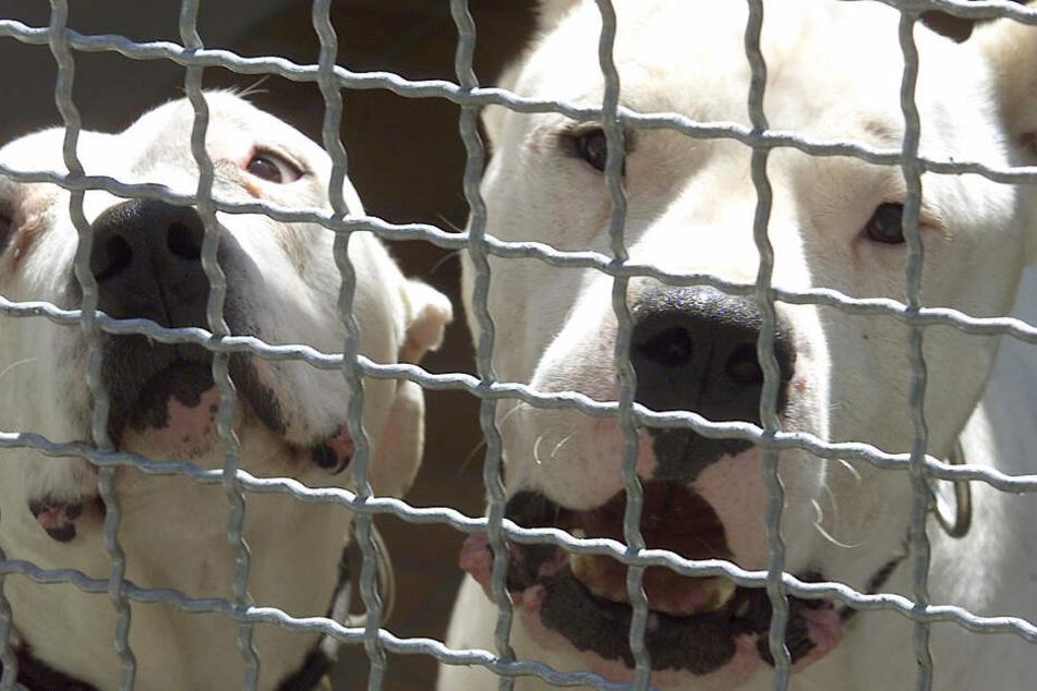 Kampfhunde auf Radler gehetzt: So lange muss der Teenager in Haft