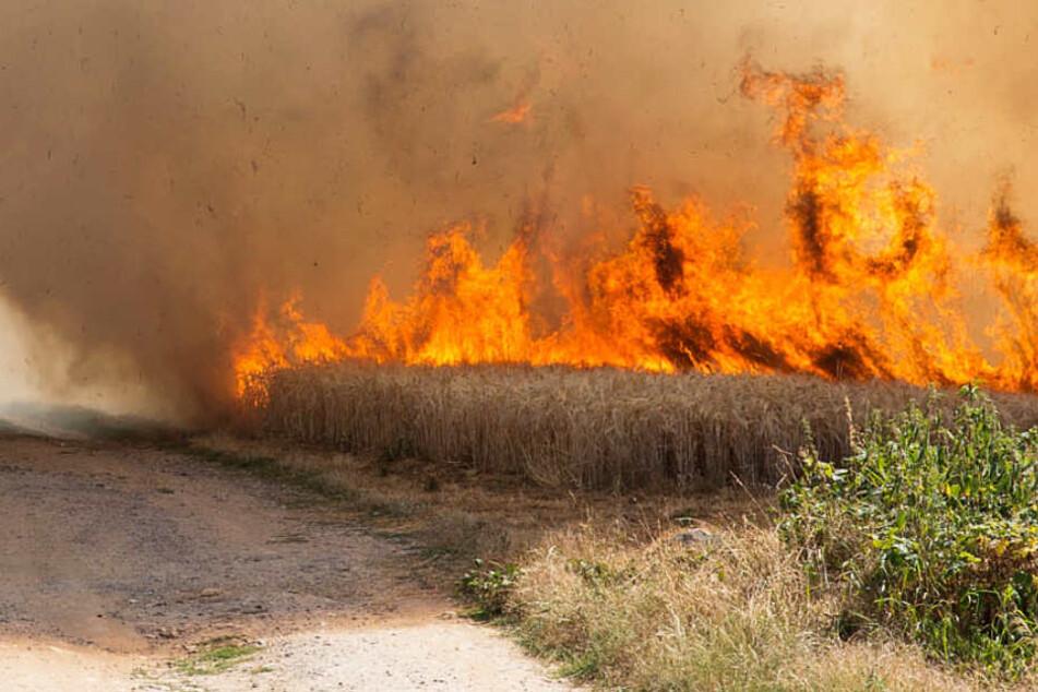 Ein Feld stand lichterloh in Flammen.
