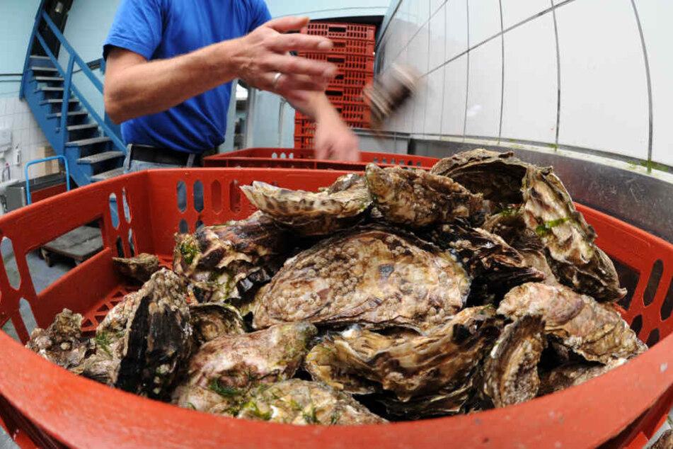 Die in den Austern gefundenen Noroviren gehören zu den häufigsten Erregern für Brechdurchfall. (Symbolbild)