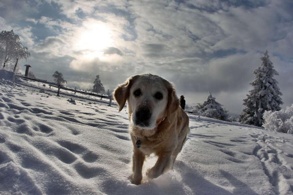 Doch auch wenn's kalt ist und Schnee liegt. Hunde spielen gerne auch im Schnee und müssen dennoch mit ihren Frauchen und Herrchen Gassi gehen. Vielleicht nur nicht immer ganz so lang.