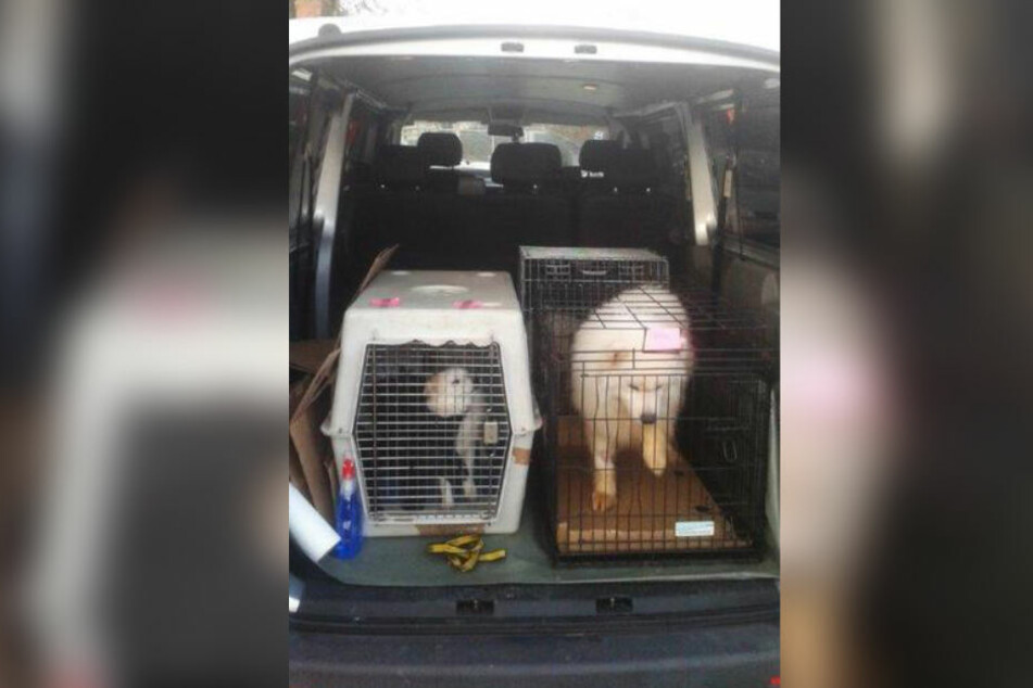 Die Münchner Polizisten entdeckten die sechs Hunde im Transporter.