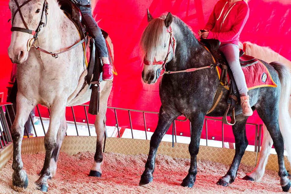 Im Ponykarussel gehen die Tiere meist stundenlang im Kreis. (Symbolbild)