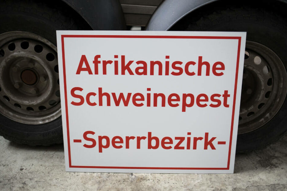 """En Schild mit der Aufschrift """"Afrikanische Schweinepest - Sperrbezirk-"""" steht bei an einen Anhänger gelehnt. (Archivbild)."""