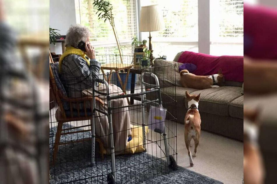Oma Dorothy sitzt in einem Käfig, während die Hunde die Couch für sich haben.