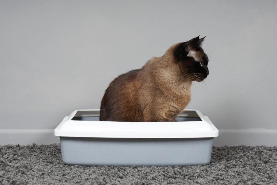 Hygiene ist das A und O. Die tägliche Reinigung des Katzenklos minimiert das Risiko einer Toxoplasmose Infektion.
