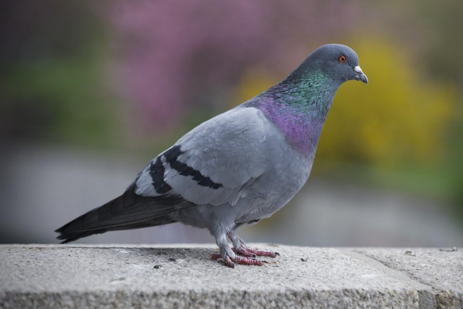 Taubenhassender Rentner schießt mit Gewehr auf Vögel