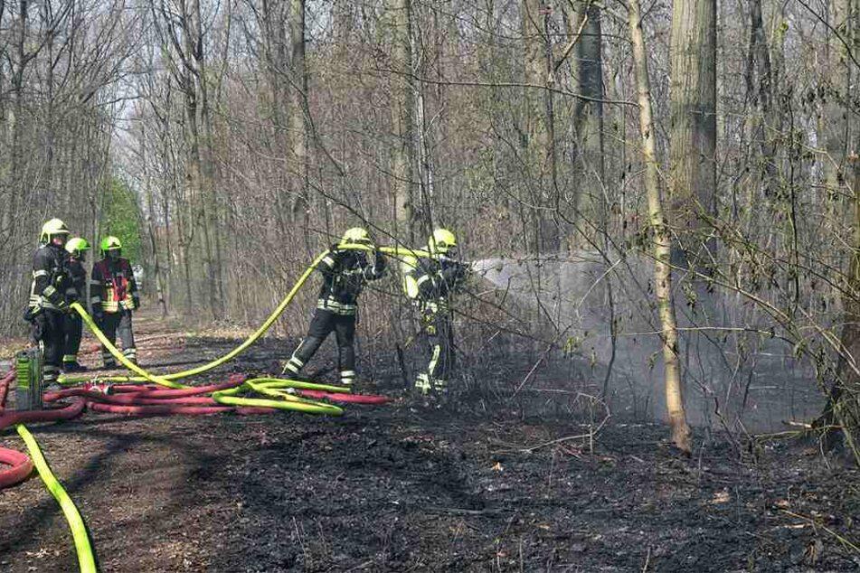 Die Feuerwehr kämpfte im Stadtwald von Ebersdorf gegen die Flammen.