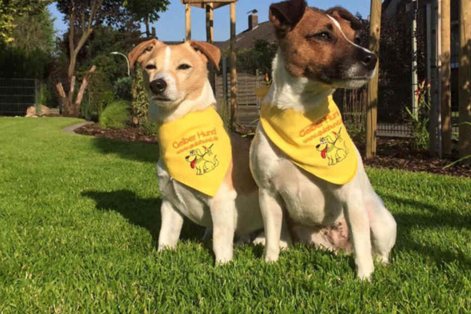 """""""Gelbe Hunde"""" - da heißt es, einfach ein bisschen vorsichtiger zu sein."""