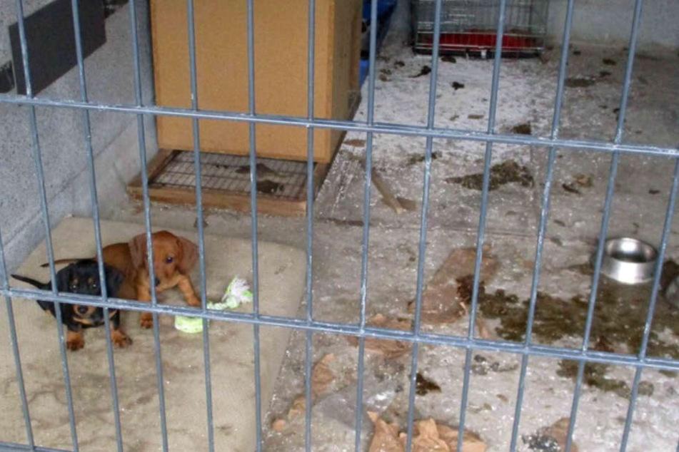 Die Hundewelpen lebten bisher umgeben von ihren eigenen Exkrementen.