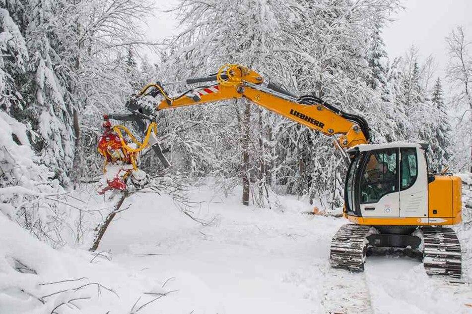Die Zufahrtsstraße in Niederschlag musste mit schwerer Technik freigeräumt werden, Bäume waren unter der Schneelast zusammengebrochen.