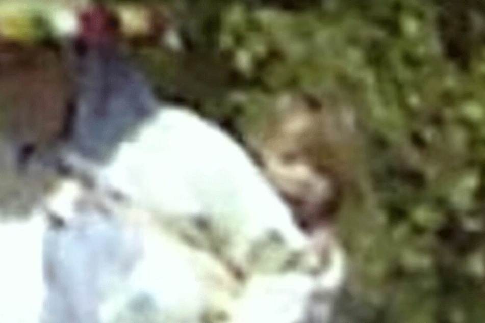 Zeigt dieses Videobild Maddie McCann?