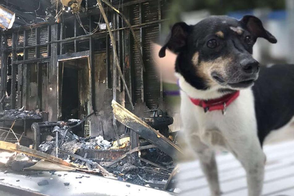 Hund rettet Familie und bezahlt Heldentat mit seinem Leben