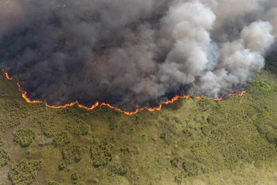 Auf diesem vom mexikanischen Umweltamt (SEMA) im Bundesstaat Quintana Roo zur Verfügung gestellten Bild steigen Rauchwolken im Naturschutzgebiet Sian Ka'an in den Himmel.