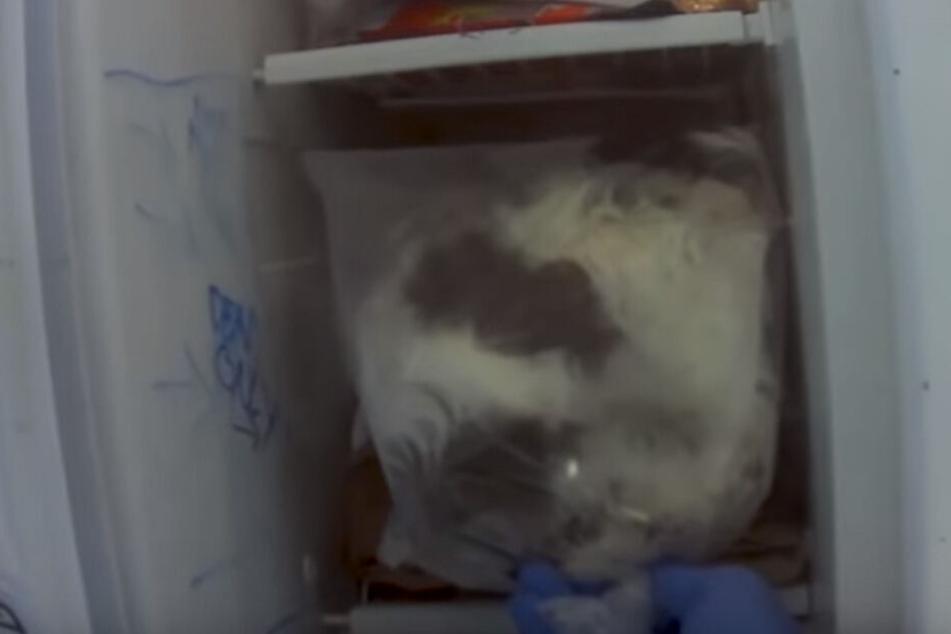 Im Kühlschrank fand man tatsächlich die steifen Überreste von Hundewelpen.