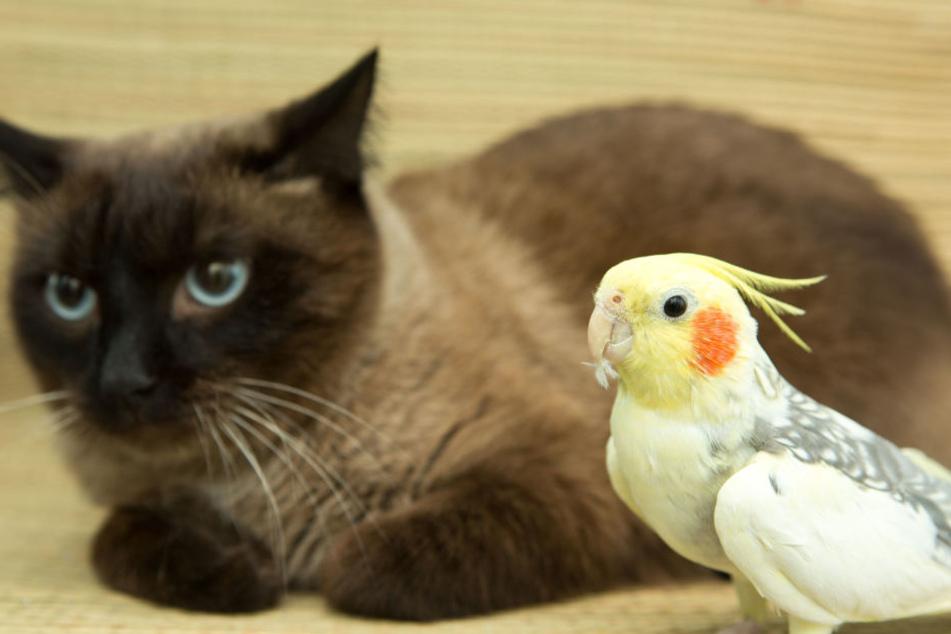 Die Katze und den Sittich nahmen die Einbrecher mit. (Symbolbild)