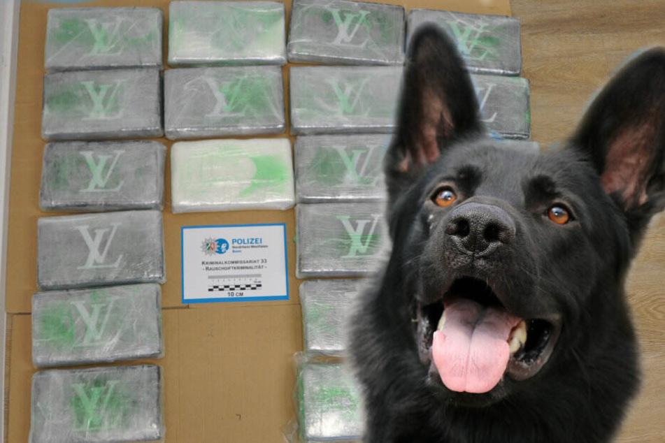 Drogenspürhund Ulla findet Kokain mit Millionen-Wert