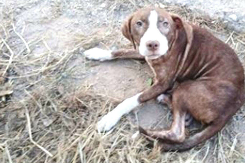 Ein Mischlingshund kümmerte sich rührend um einen ausgerissenen Mann.