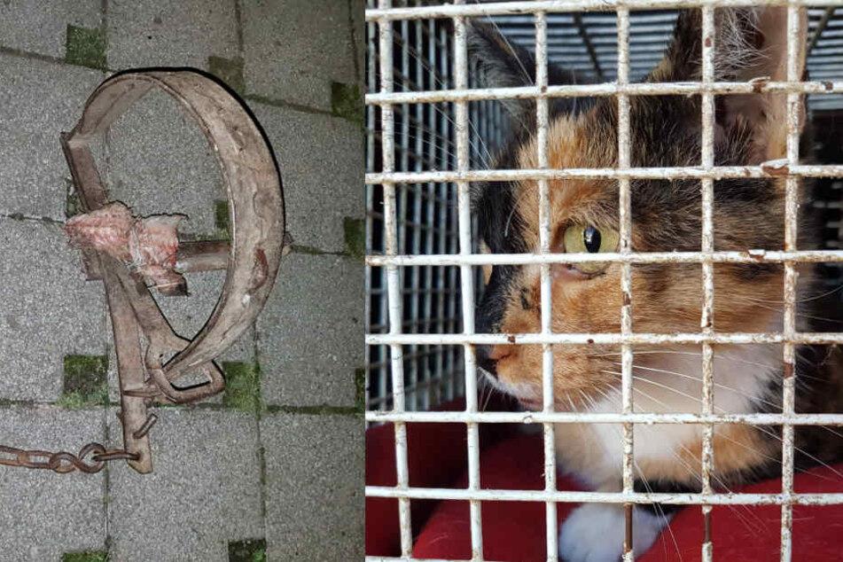 Grausam! Katze von Schlagfalle schwer verletzt
