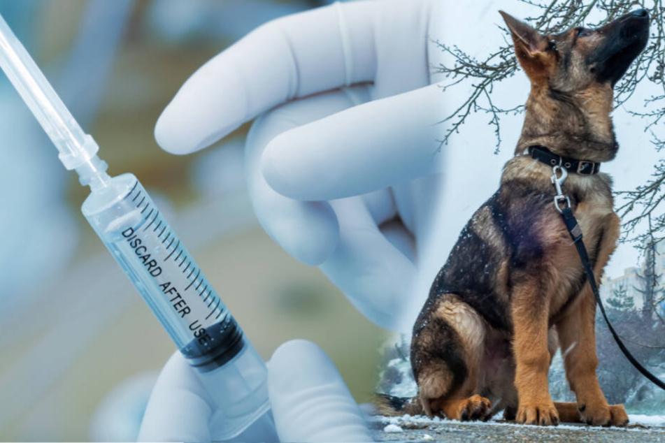 Gesunder Hund eingeschläfert: Darum beendet Besitzerin das Leben ihres Vierbeiners!
