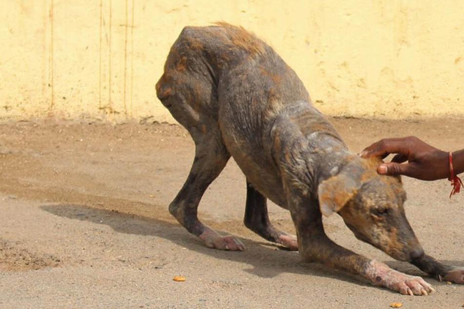 Tierschützer retten schwerkranke Hündin: Unglaublich, wie sie heute aussieht