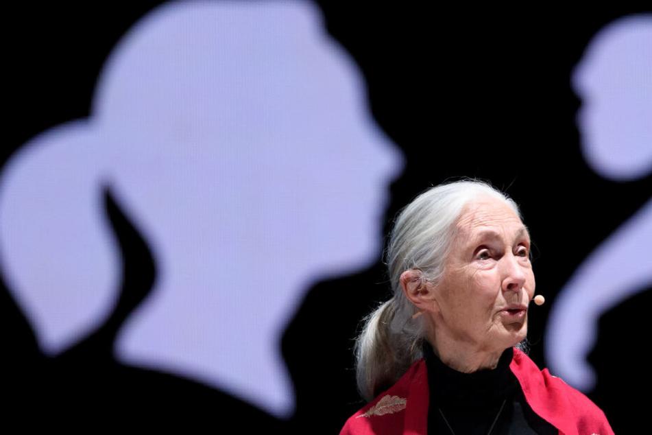 """Jane Goodall bei ihrem Vortrag """"Reasons for Hope"""" in München."""