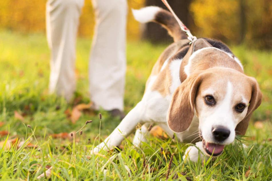 Hundehasser am Werk: Giftköder bei Gießen ausgelegt