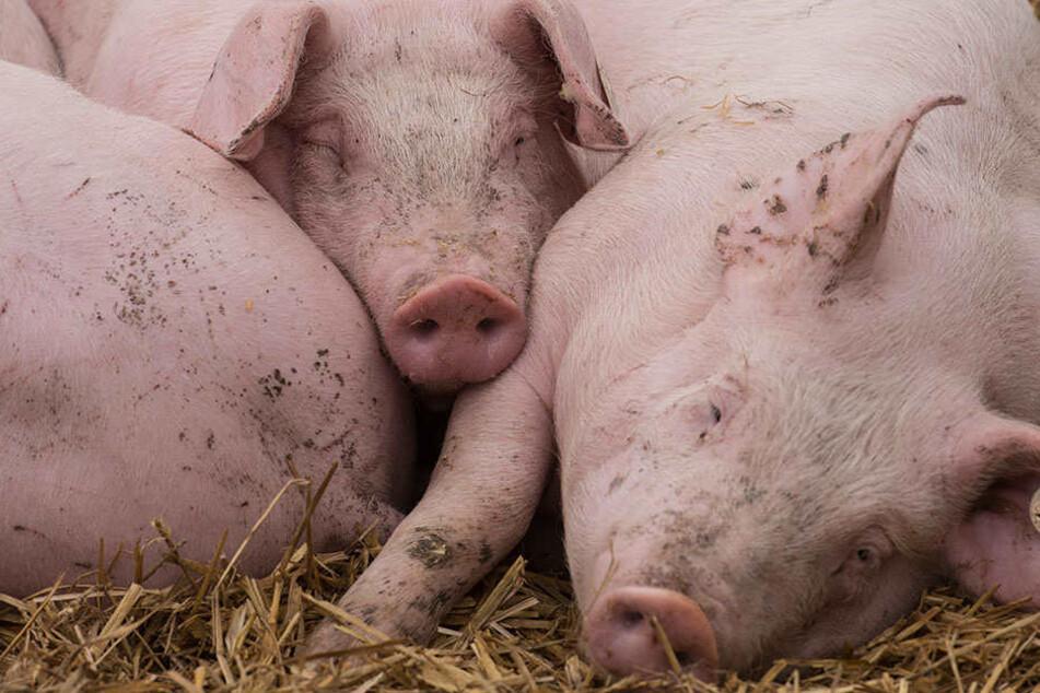 Tierrechtler machen erschreckende Tierquälerei öffentlich