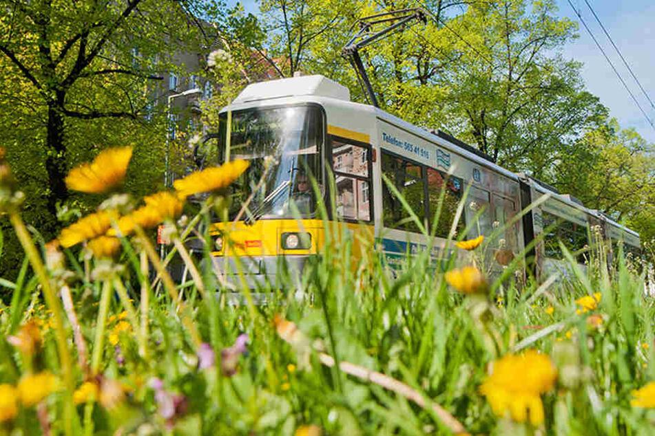 Mit der Straßenbahn durch's Grüne. Wenn es nach den Umweltschützer geht, kann ein Ausbau gar nicht üppig genug ausfallen. (Symbolbild)
