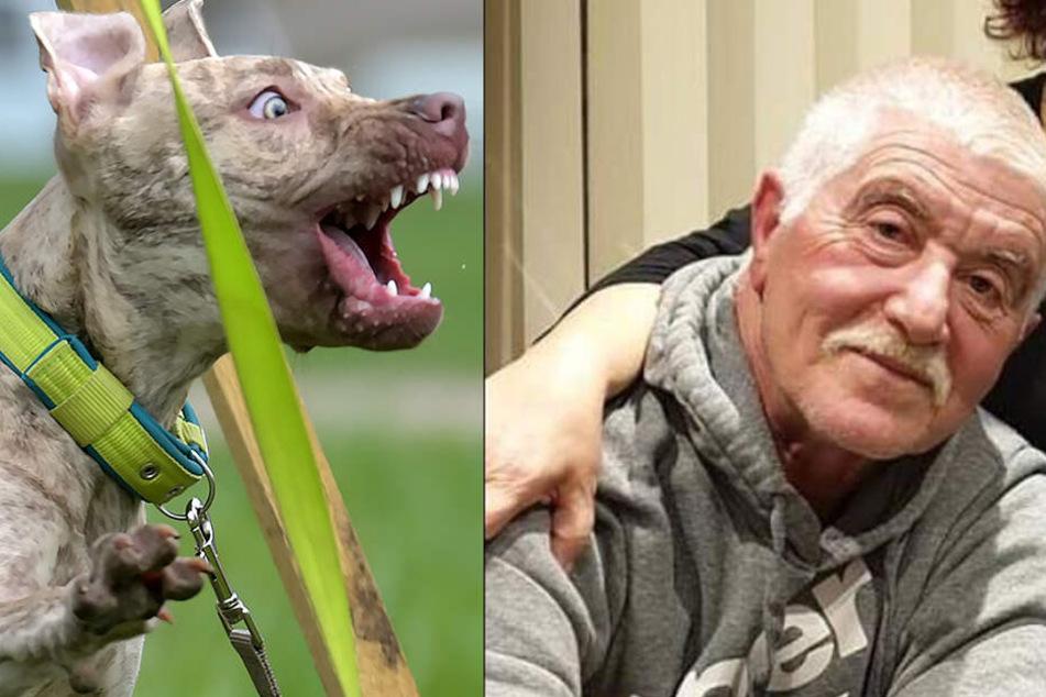 Rollstuhlfahrer (†61) von Hund zerfleischt! Das Tier kannte keine Gnade