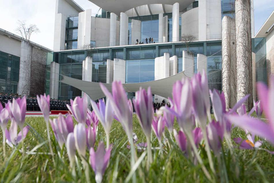 Im Innenhof des Bundeskanzleramts blühen die Krokusse.