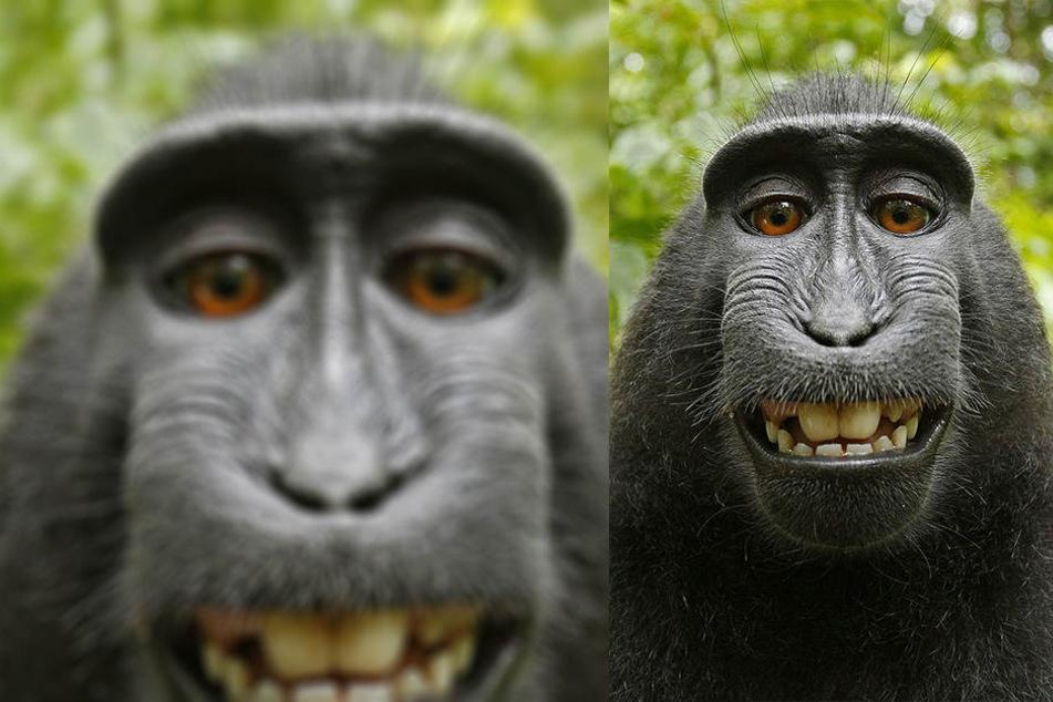 Der Streit über dieses süße Selfie hat jahrelang gedauert.