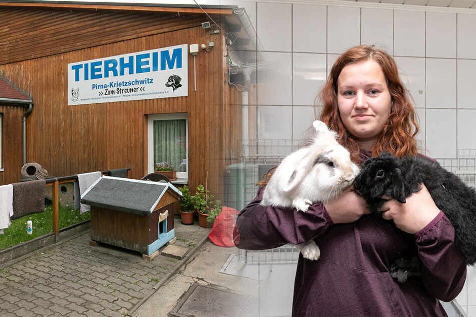 Dresden: Tierheim Pirna: Pixi, Nelly und zwei Kaninchen suchen ein neues Zuhause