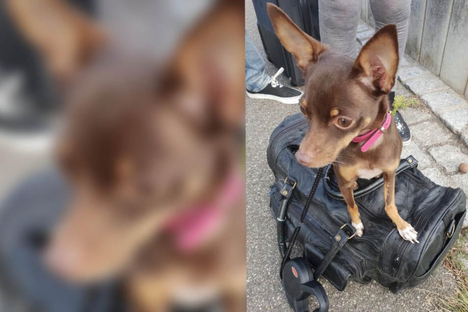 Unfassbar: Seniorin geht kurz einkaufen, da klauen Diebe ihren Hund!