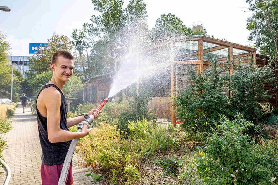 Simulierter Regen für die schwachen Piepser: Niklas Kappler (18) sorgt an der Wildvogelauffangstation in Dresden-Kaditz für Erfrischung.