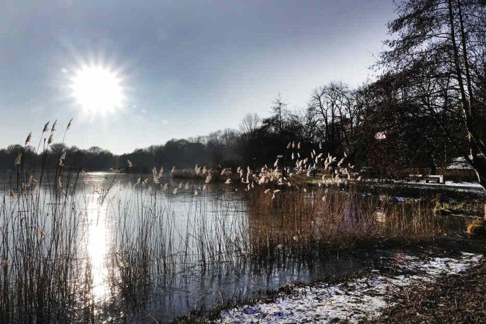 Wildromantisch zeigt sich der Schlossteich dieser frostigen Tage. Die Eisfläche zu betreten, ist aber verboten. Zu groß ist die Gefahr einzubrechen.
