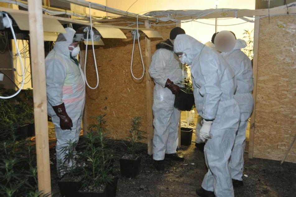 Polizei hebt Hanfplantage und Waffenlager aus. Mann (61) und Junge (16) verhaftet