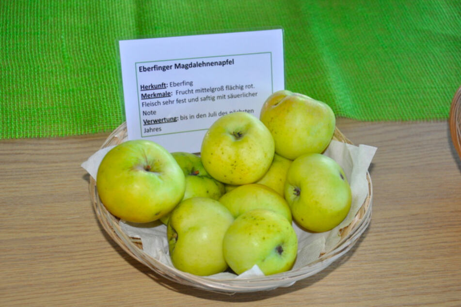 """Rettung vergessener Früchte: Weißt Du, was man aus """"Würgebirnen"""" macht?"""