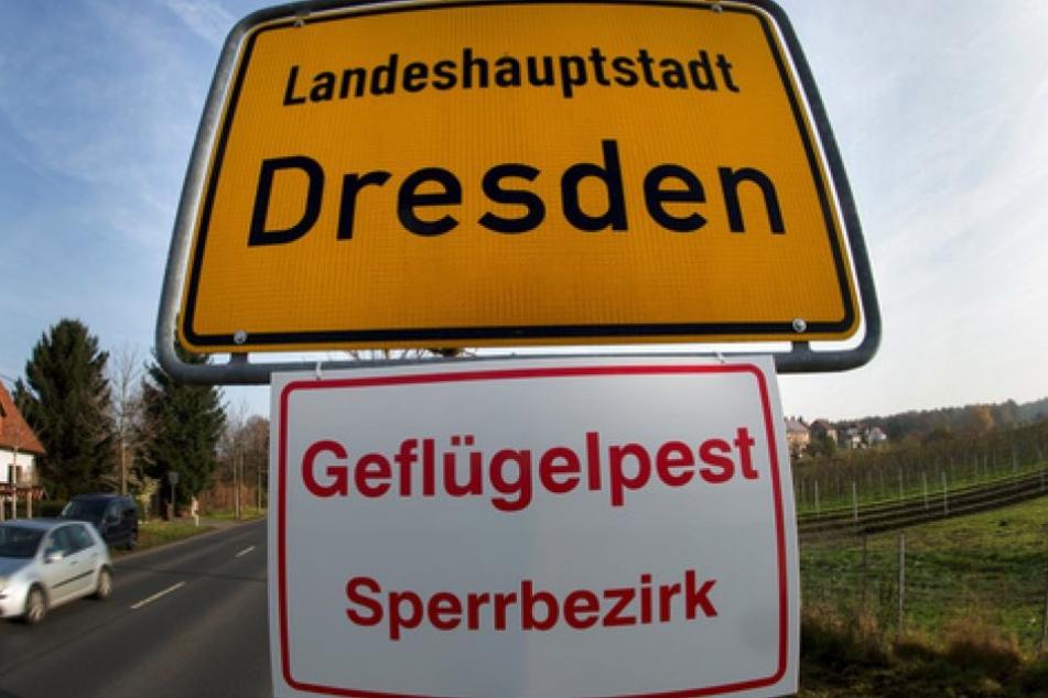 In Sachsen sind seit dem Ausbruch der Vogelgrippe im November mindestens 15 Tiere dem gefährlichen H5N8-Virus zum Opfer gefallen (Symbolbild).