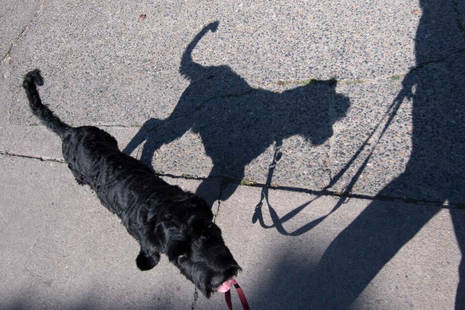 Mehr Hunde bedeuten auch mehr Hundekot. (Symbolbild)