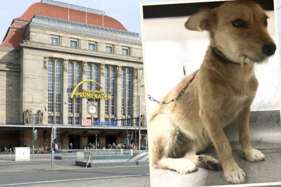 Eine Touristin fand Struppi vor ihrem Hotel unweit des Hauptbahnhofs.