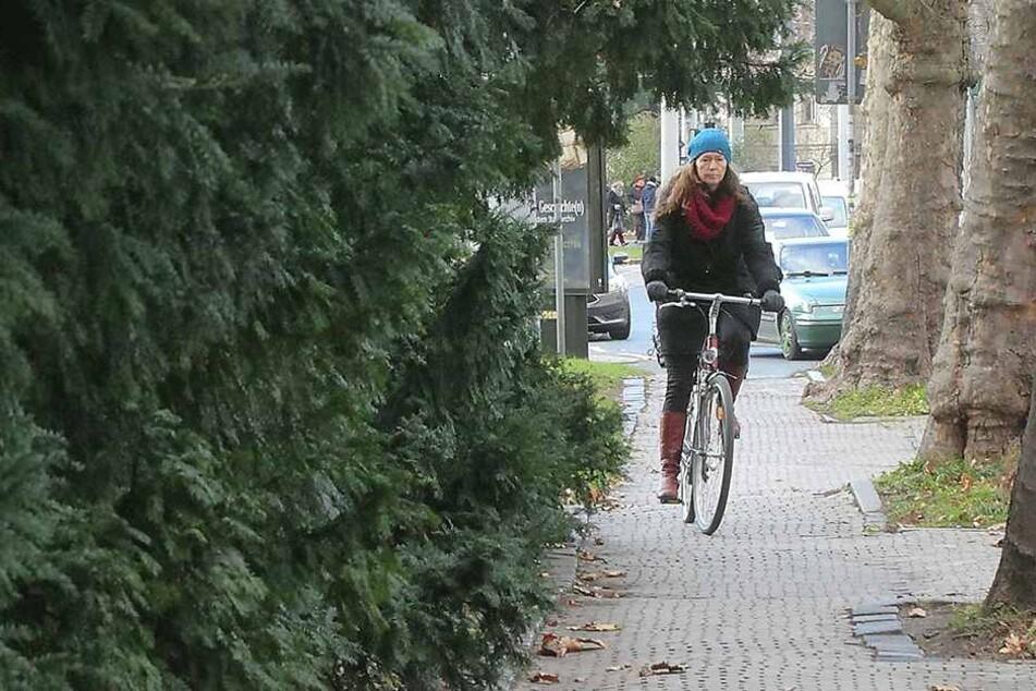 Auch die Büsche entlang der Bautzner Straße dürfen nicht einfach so einem Radweg weichen.