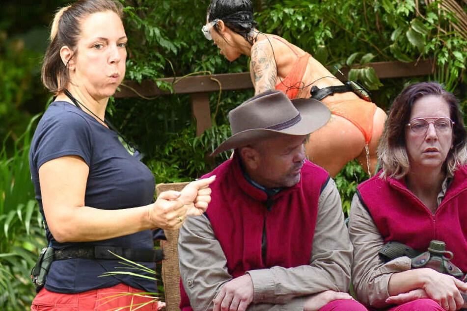 Dschungelcamp: Dschungelcamp: Volles Rohr Belastungsproben für die Camper im RTL-Busch und Büchner-Beef