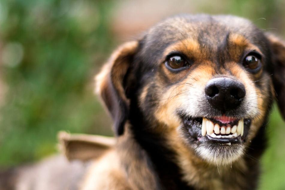 Der Täter hatte einen aggressiven Hund bei sich, der ebenfalls zum Angriff überging (Symbolbild).