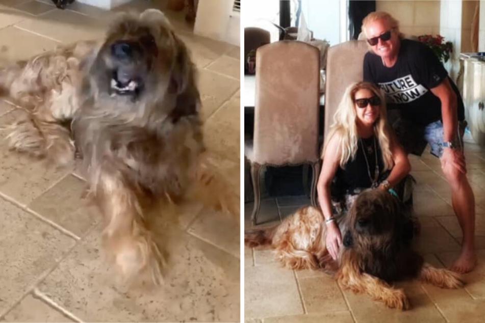 Foto der Geissens mit Familienhund Dex löst erneut Diskussion im Netz aus