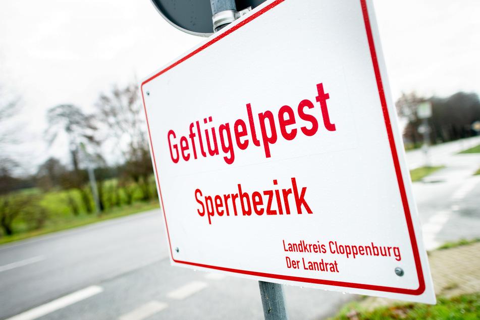 """Ein Schild mit der Aufschrift """"Geflügelpest Sperrbezirk"""" steht an einer Straße im Landkreis Cloppenburg."""