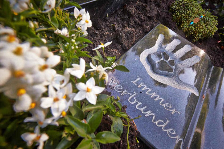 In Jena-Burgau ist jetzt eine gemeinsame Bestattung mit dem Haustier möglich. (Archivbild)