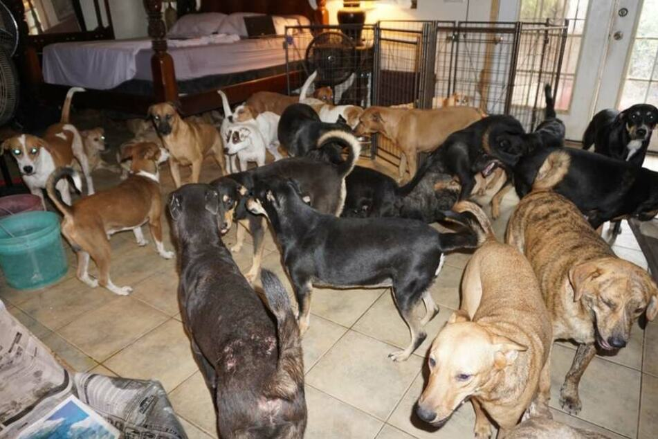 Chella Phillips zeigt die Hunde in ihrem Schlafzimmer im Internet.