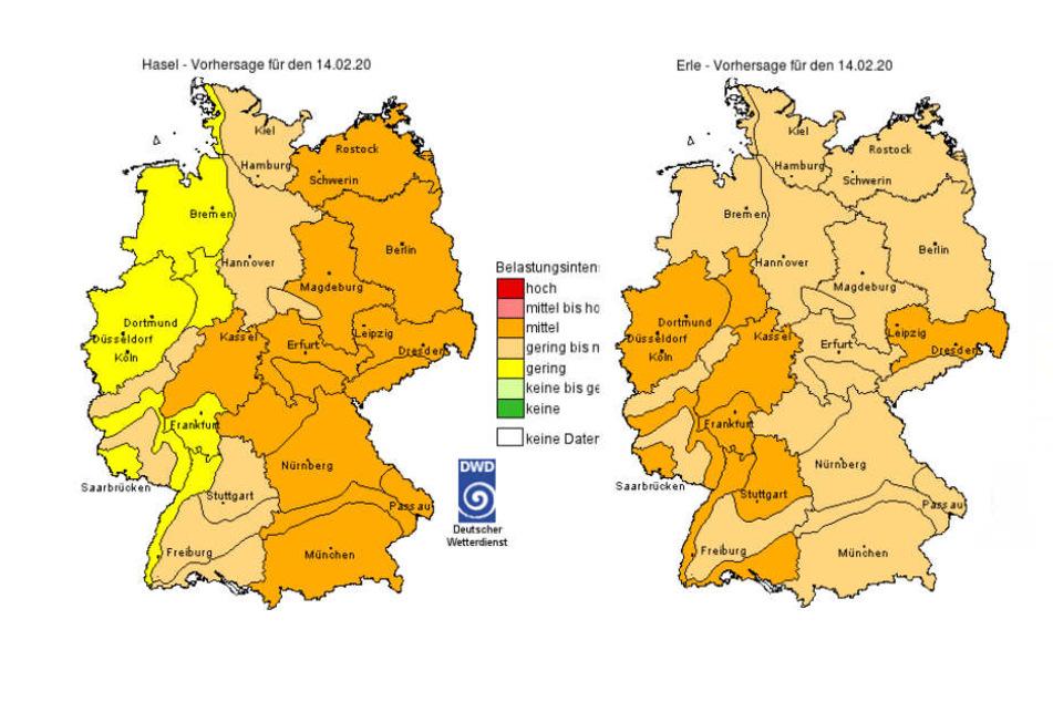 Die aktuelle Pollenbelastung sowohl für Hasel (links) als auch Erle (rechts) in Deutschland.
